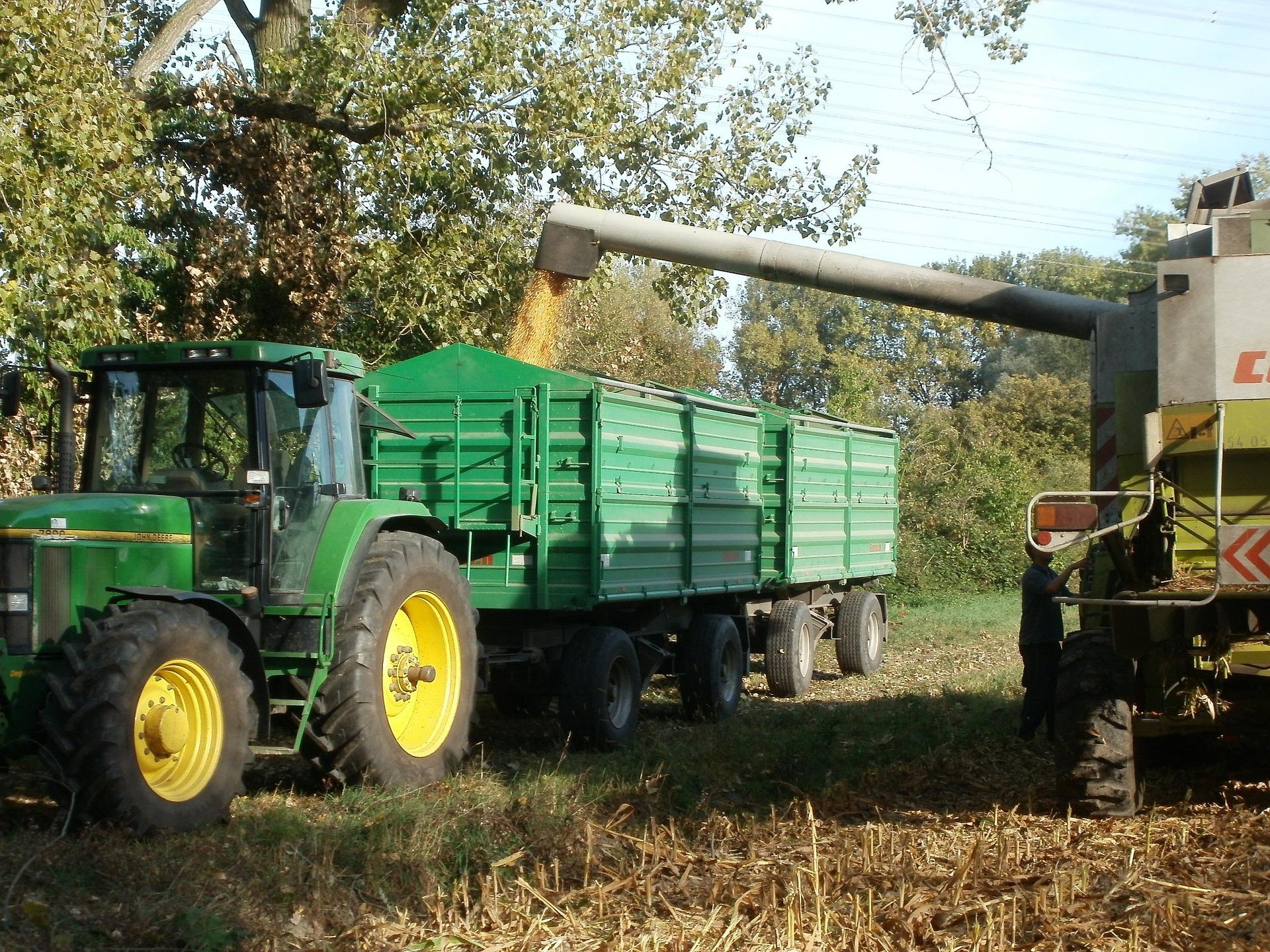 corn-837806_1920