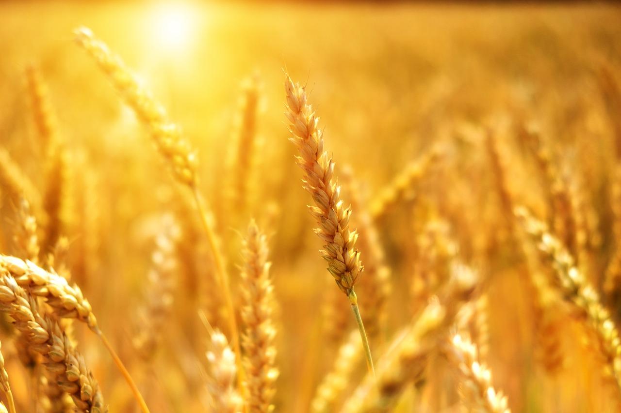 Poder Agropecuario
